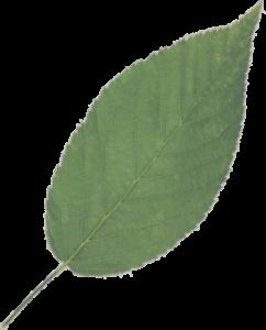 leaf logo eco friendly furniture green furniture